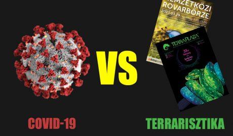 Covid-9 vs Terrarisztika